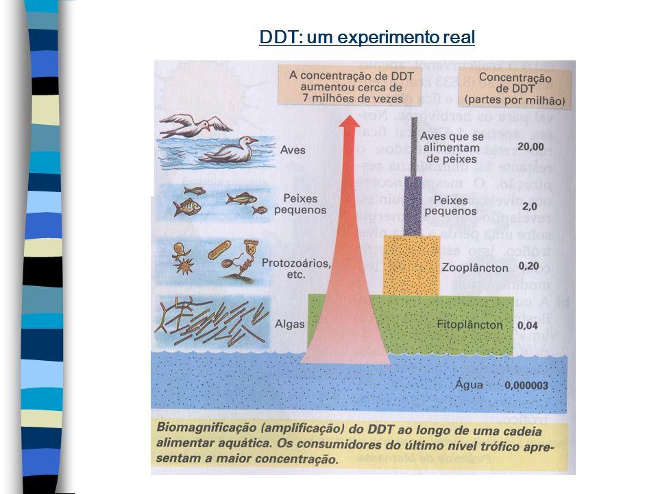 DDT: efeito acumulativo O DDT (dicloro-difenil- tricloroetano) é um inseticida organoclorado que é biodegradado lentamente; por isso apresenta o efeit