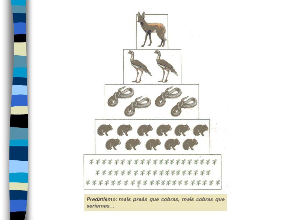 PIRÂMIDES ECOLÓGICAS São representações gráficas e quantitativas das cadeias alimentares. Podem ser classificadas em pirâmides de números, de biomassa