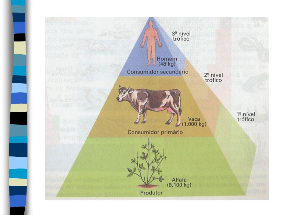 As transferências de energia em um ecossistema obedecem as duas leis da Termodinâmica, comumente abordados em Física. A primeira: a energia não se cri