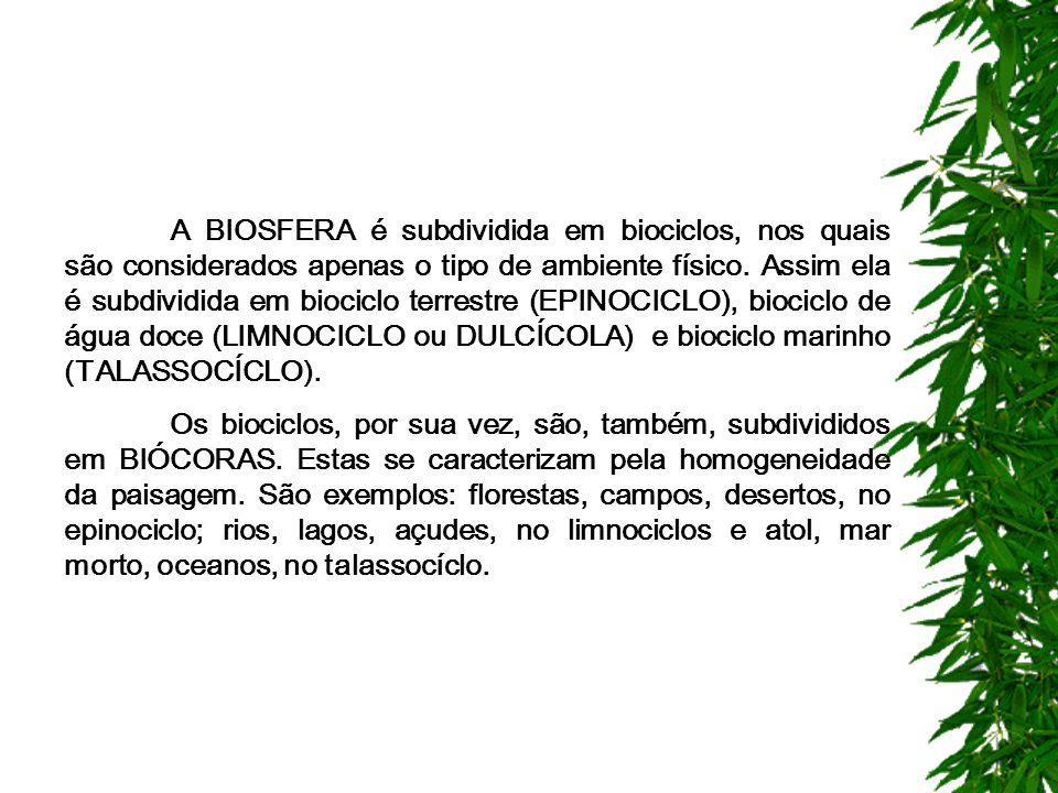 A BIOSFERA é subdividida em biociclos, nos quais são considerados apenas o tipo de ambiente físico.