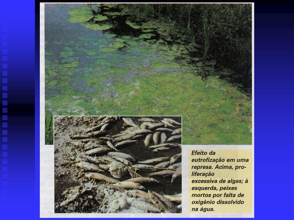 - a população de alga na superfície cresce até que algum nutriente comece a faltar (como o nitrato, que geralmente se torna escasso); as algas morrem