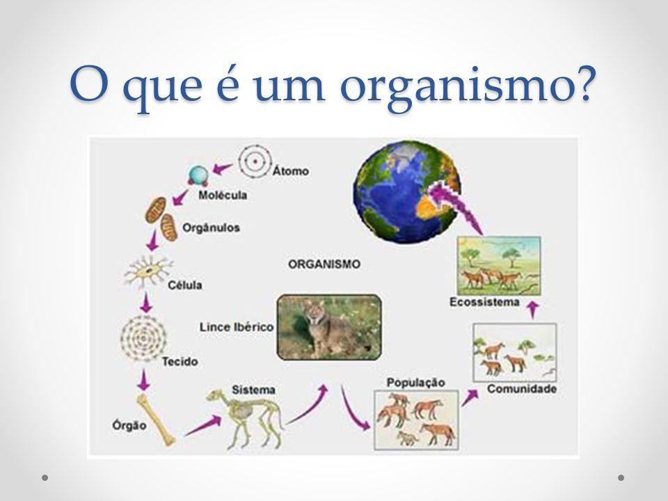 Os níveis de organização valem para todos os organismos?