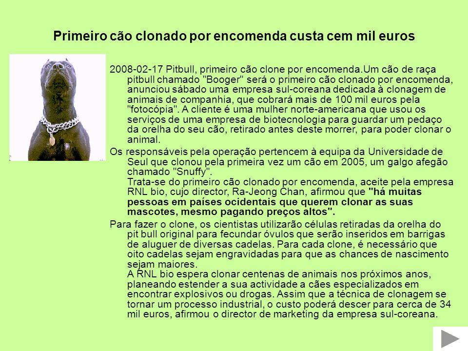 Primeiro cão clonado por encomenda custa cem mil euros 2008-02-17 Pitbull, primeiro cão clone por encomenda.Um cão de raça pitbull chamado