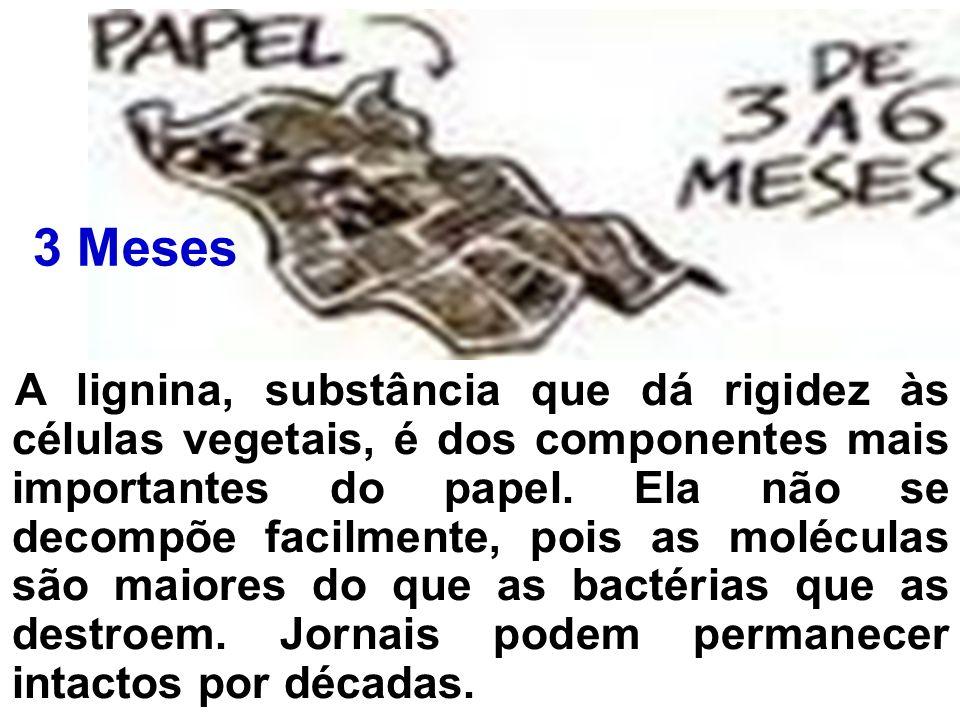 A lignina, substância que dá rigidez às células vegetais, é dos componentes mais importantes do papel. Ela não se decompõe facilmente, pois as molécul