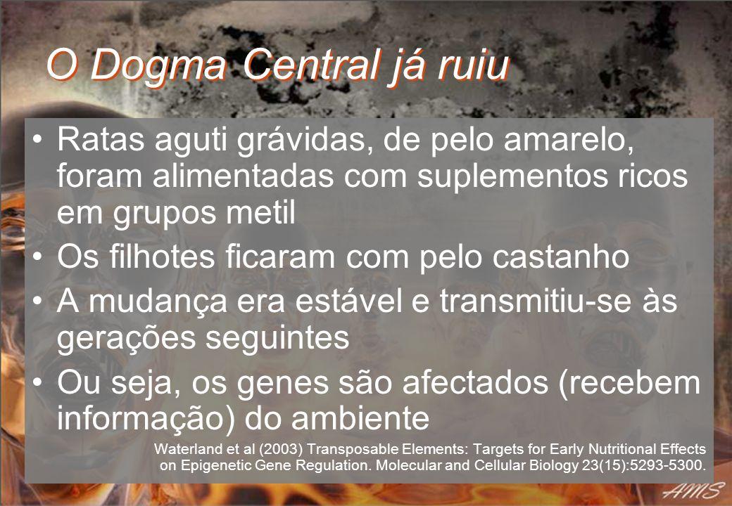 O Dogma Central já ruiu Ratas aguti grávidas, de pelo amarelo, foram alimentadas com suplementos ricos em grupos metil Os filhotes ficaram com pelo ca