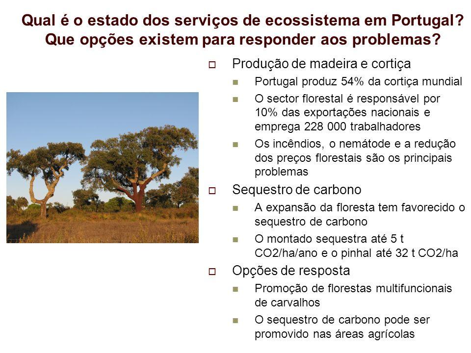 Produção de madeira e cortiça Portugal produz 54% da cortiça mundial O sector florestal é responsável por 10% das exportações nacionais e emprega 228