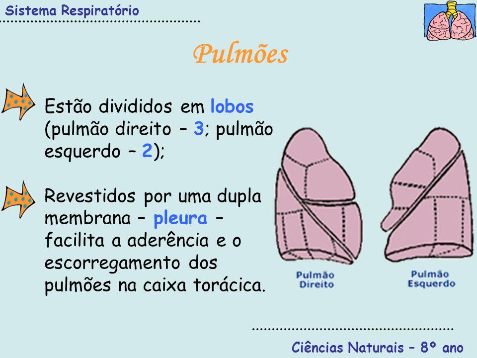 Sistema Respiratório Ciências Naturais – 8º ano Pulmões Estão divididos em lobos (pulmão direito – 3; pulmão esquerdo – 2); Revestidos por uma dupla m