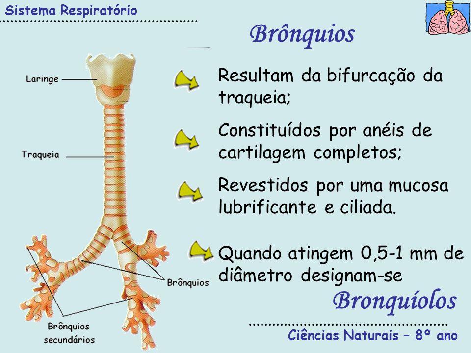 Ciências Naturais – 8º ano Sistema Respiratório Brônquios Resultam da bifurcação da traqueia; Constituídos por anéis de cartilagem completos; Revestid
