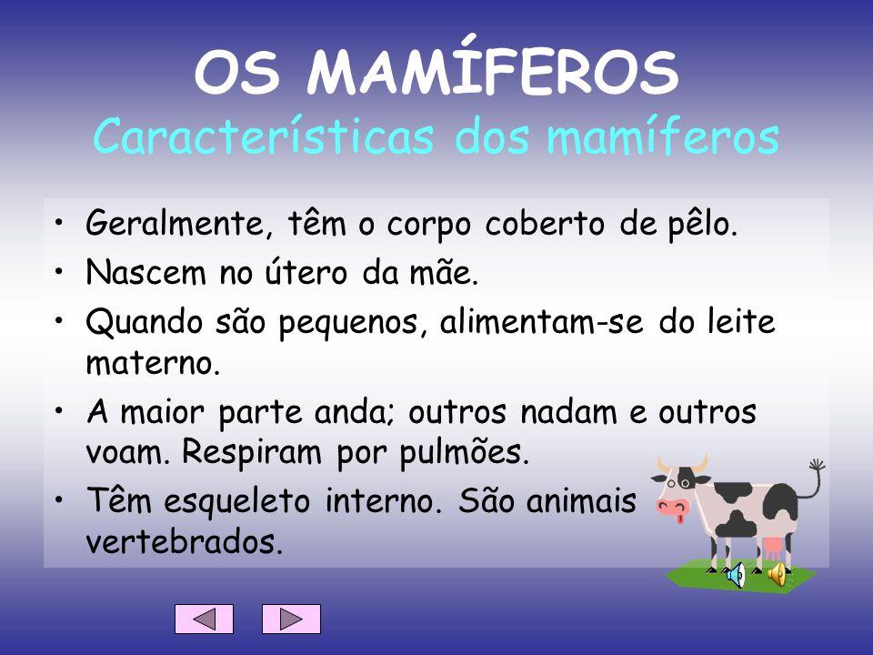 BELEM RUIZ ORDUÑA Tradução de: Professor Vaz Nunes (Ovar – Portugal) Características dos animais: mamíferos, aves, peixes, répteis, anfíbios e insecto