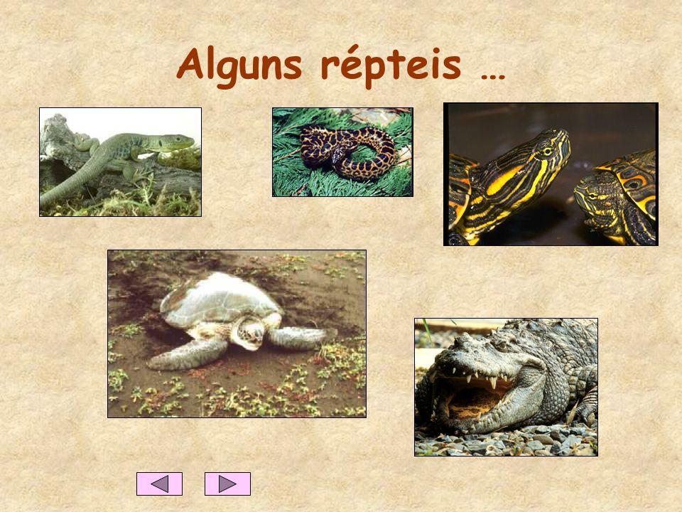 OS RÉPTEIS Características dos répteis Geralmente, têm o corpo coberto de escamas e alguns têm uma carapaça com placas. Nascem de ovos. Respiram por p