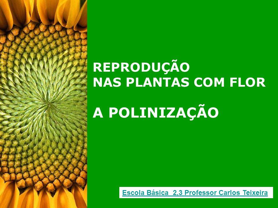 REPRODUÇÃO NAS PLANTAS COM FLOR A POLINIZAÇÃO Escola Básica 2,3 Professor Carlos Teixeira