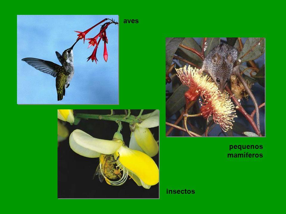 insectos pequenos mamíferos aves
