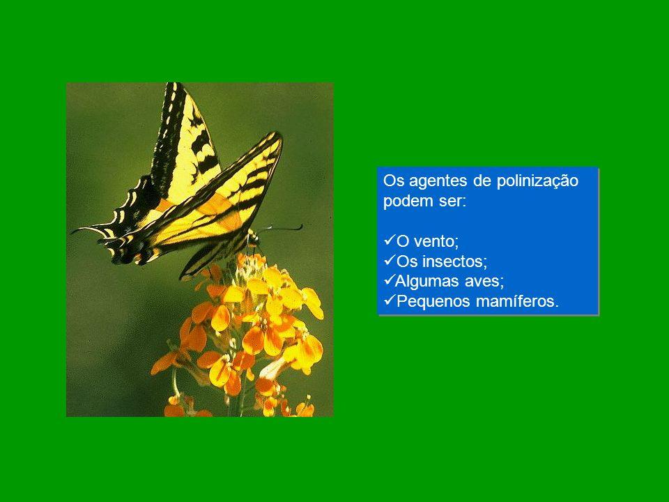 Os agentes de polinização podem ser: O vento; Os insectos; Algumas aves; Pequenos mamíferos. Os agentes de polinização podem ser: O vento; Os insectos