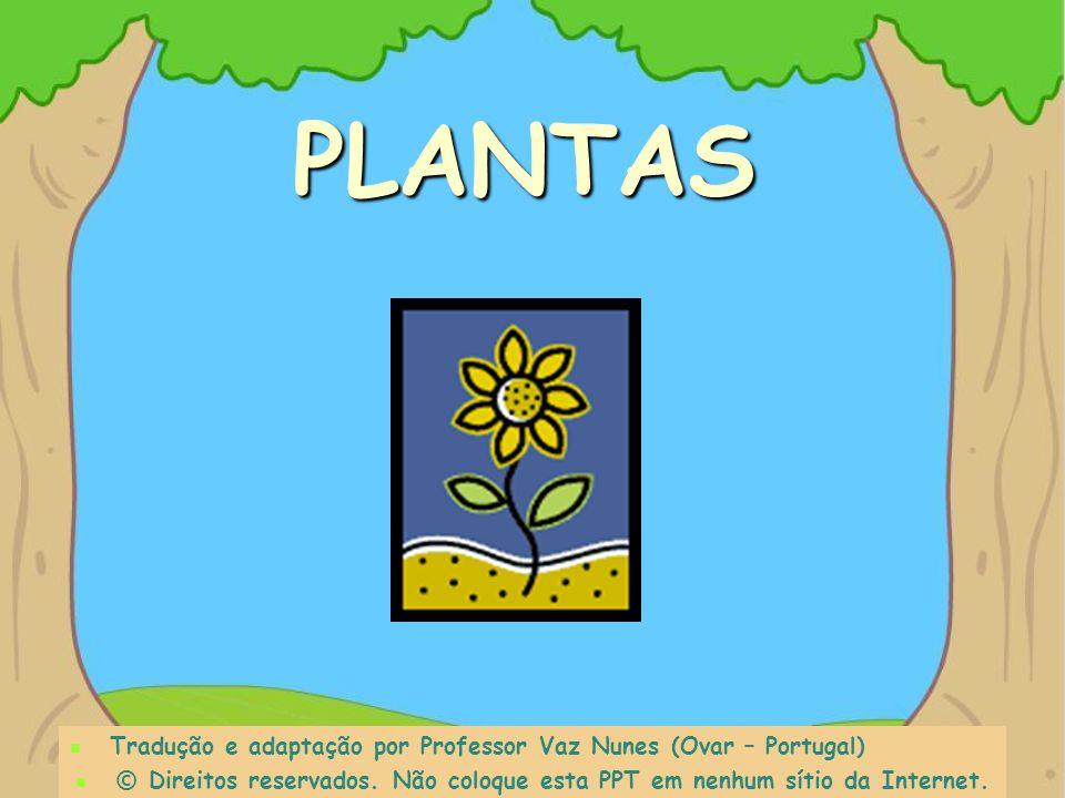 O que precisam as plantas para crescer ?