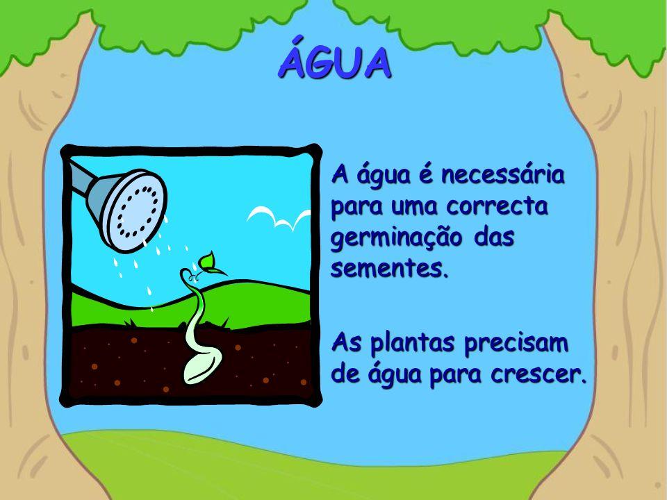 ÁGUA A água é necessária para uma correcta germinação das sementes. As plantas precisam de água para crescer.