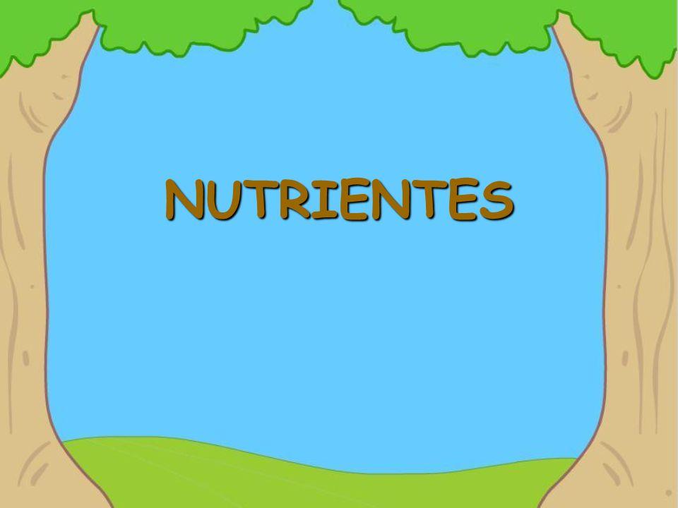NUTRIENTES As plantas preci- sam de minerais que estão no solo, para terem um crescimento saudável.