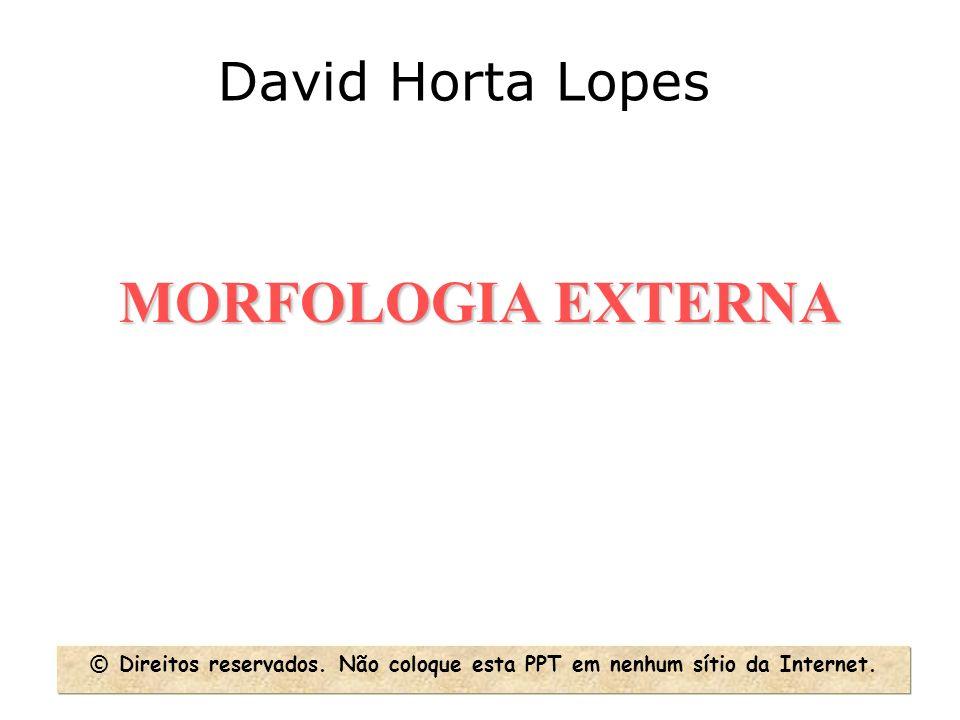MORFOLOGIA EXTERNA David Horta Lopes © Direitos reservados. Não coloque esta PPT em nenhum sítio da Internet.