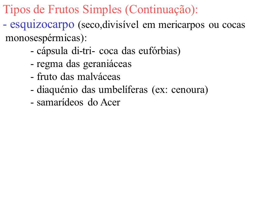Tipos de Frutos Simples (Continuação): - esquizocarpo (seco,divisível em mericarpos ou cocas monosespérmicas): - cápsula di-tri- coca das eufórbias) -