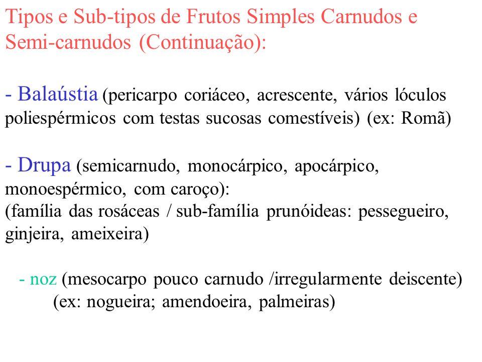 Tipos e Sub-tipos de Frutos Simples Carnudos e Semi-carnudos (Continuação): - Balaústia (pericarpo coriáceo, acrescente, vários lóculos poliespérmicos