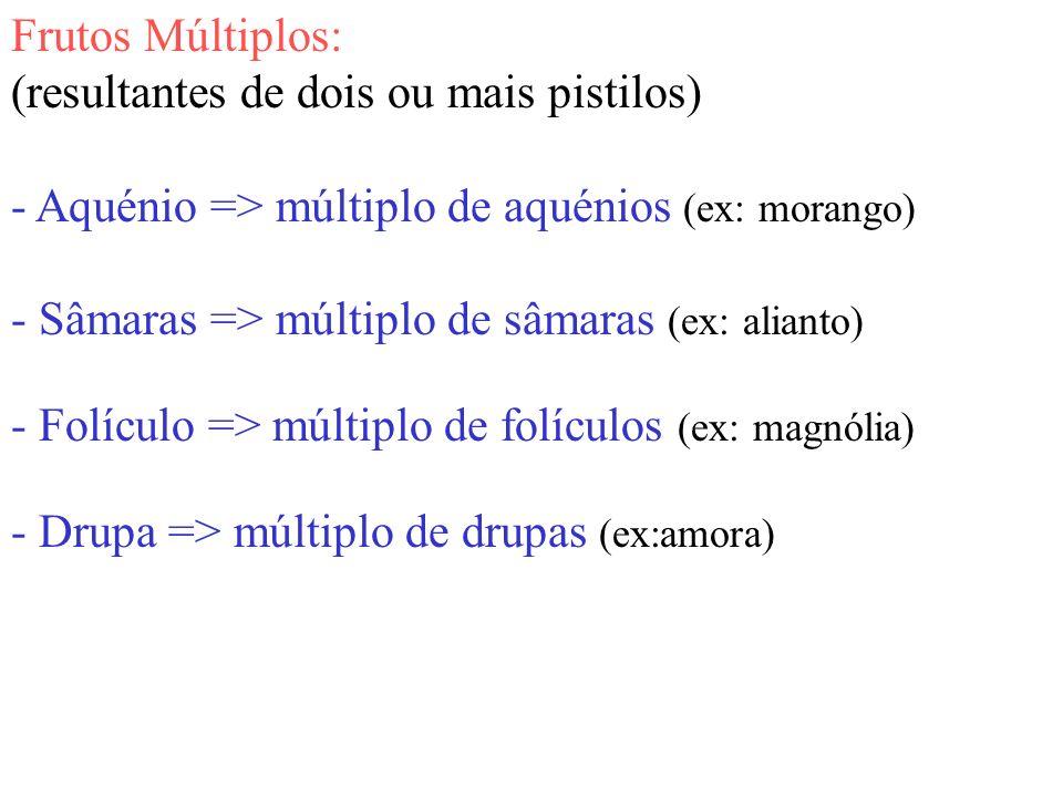 Frutos Múltiplos: (resultantes de dois ou mais pistilos) - Aquénio => múltiplo de aquénios (ex: morango) - Sâmaras => múltiplo de sâmaras (ex: alianto