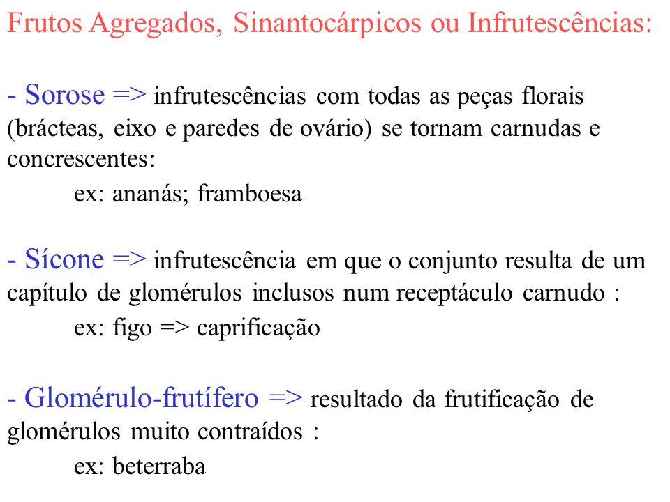 Frutos Agregados, Sinantocárpicos ou Infrutescências: - Sorose => infrutescências com todas as peças florais (brácteas, eixo e paredes de ovário) se t