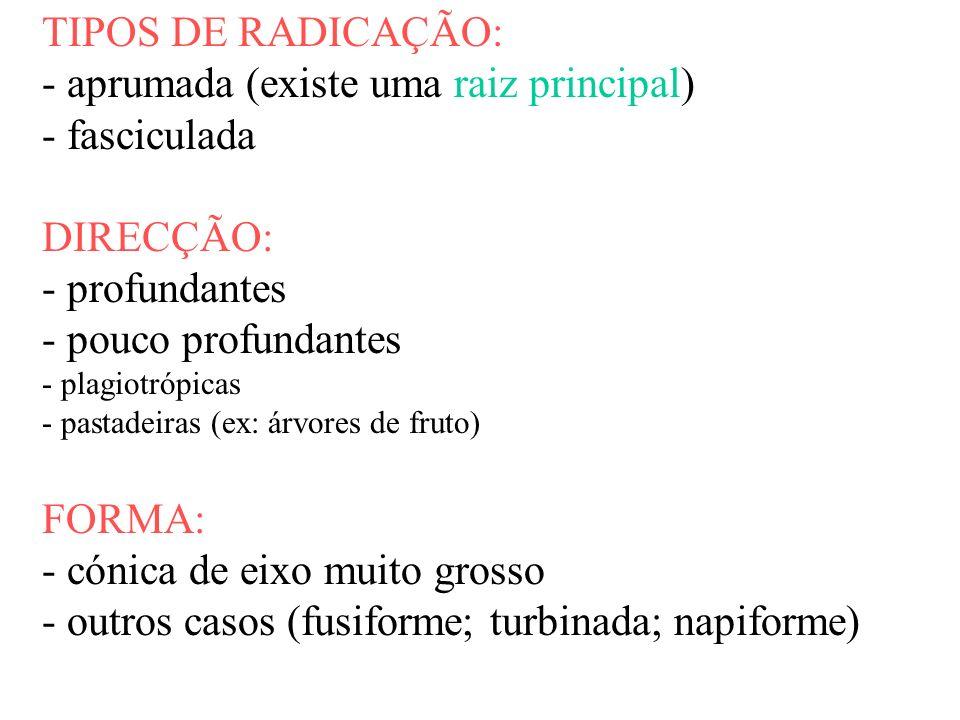 TIPOS DE RADICAÇÃO: - aprumada (existe uma raiz principal) - fasciculada DIRECÇÃO: - profundantes - pouco profundantes - plagiotrópicas - pastadeiras