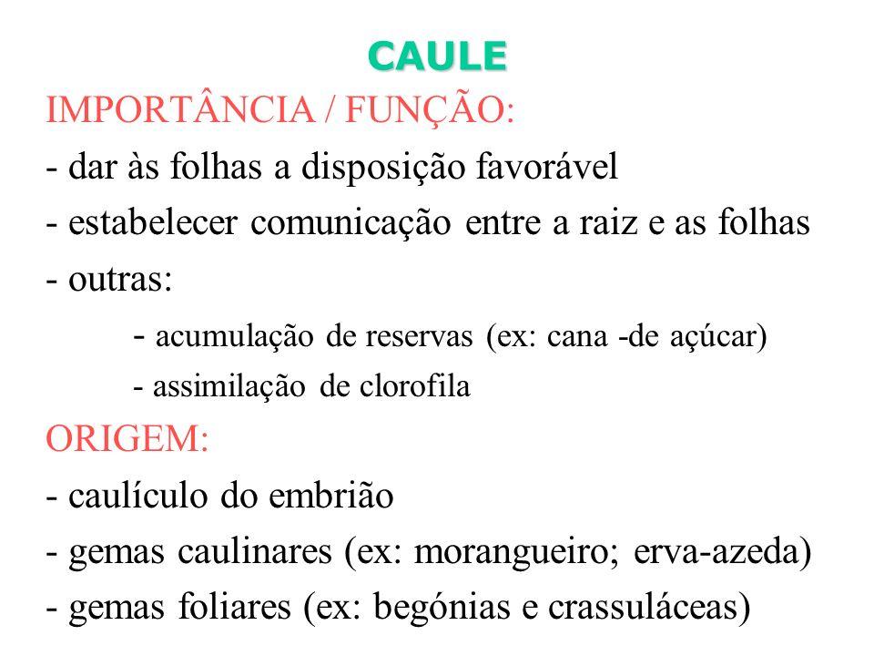 IMPORTÂNCIA / FUNÇÃO: - dar às folhas a disposição favorável - estabelecer comunicação entre a raiz e as folhas - outras: - acumulação de reservas (ex