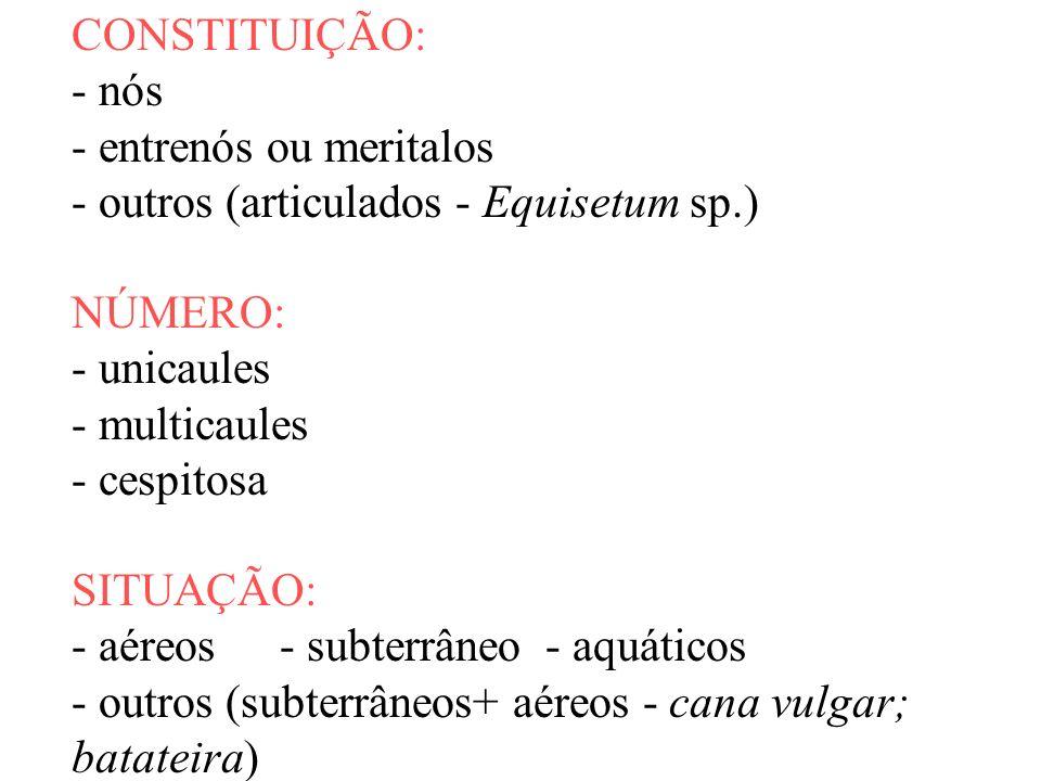 CONSTITUIÇÃO: - nós - entrenós ou meritalos - outros (articulados - Equisetum sp.) NÚMERO: - unicaules - multicaules - cespitosa SITUAÇÃO: - aéreos- s
