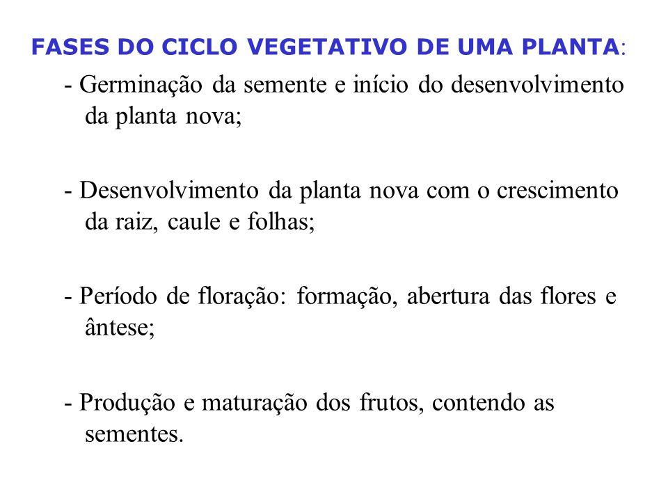 FASES DO CICLO VEGETATIVO DE UMA PLANTA : - Germinação da semente e início do desenvolvimento da planta nova; - Desenvolvimento da planta nova com o c