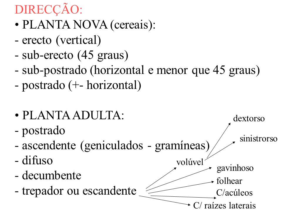 DIRECÇÃO: PLANTA NOVA (cereais): - erecto (vertical) - sub-erecto (45 graus) - sub-postrado (horizontal e menor que 45 graus) - postrado (+- horizonta