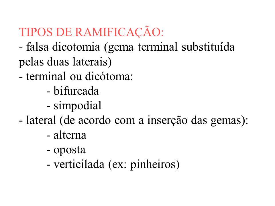 TIPOS DE RAMIFICAÇÃO: - falsa dicotomia (gema terminal substituída pelas duas laterais) - terminal ou dicótoma: - bifurcada - simpodial - lateral (de