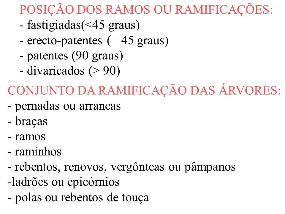 POSIÇÃO DOS RAMOS OU RAMIFICAÇÕES: - fastigiadas(<45 graus) - erecto-patentes (= 45 graus) - patentes (90 graus) - divaricados (> 90) CONJUNTO DA RAMI