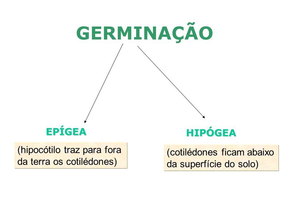FRUTO: - Plantas monocárpicas (uma só frutificação morrendo de seguida) - Plantas policárpicas (frutificam várias vezes) Constituição do fruto: - pericarpo (provém das paredes do ovário): - epicarpo (+ externa) - mesocarpo (geralmente espessa) - endocarpo (parte em contacto com as sementes) - semente (provém do óvulo): - tegumento (testa e tégmen) - amendoa