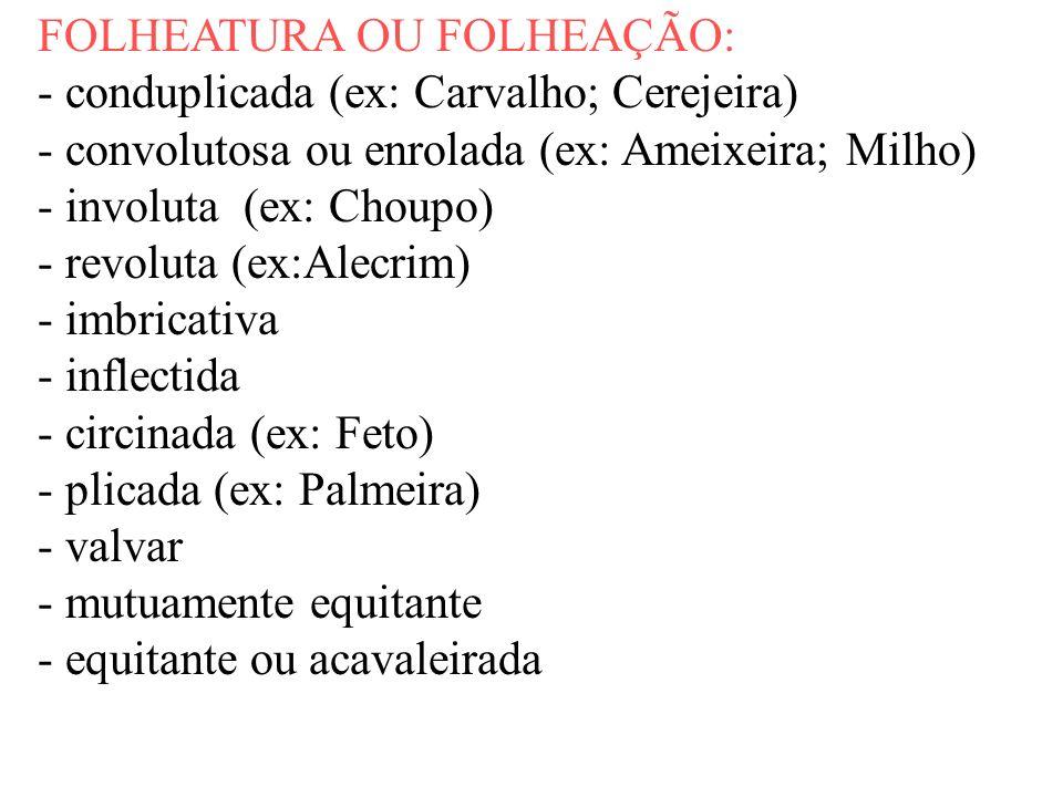 FOLHEATURA OU FOLHEAÇÃO: - conduplicada (ex: Carvalho; Cerejeira) - convolutosa ou enrolada (ex: Ameixeira; Milho) - involuta (ex: Choupo) - revoluta
