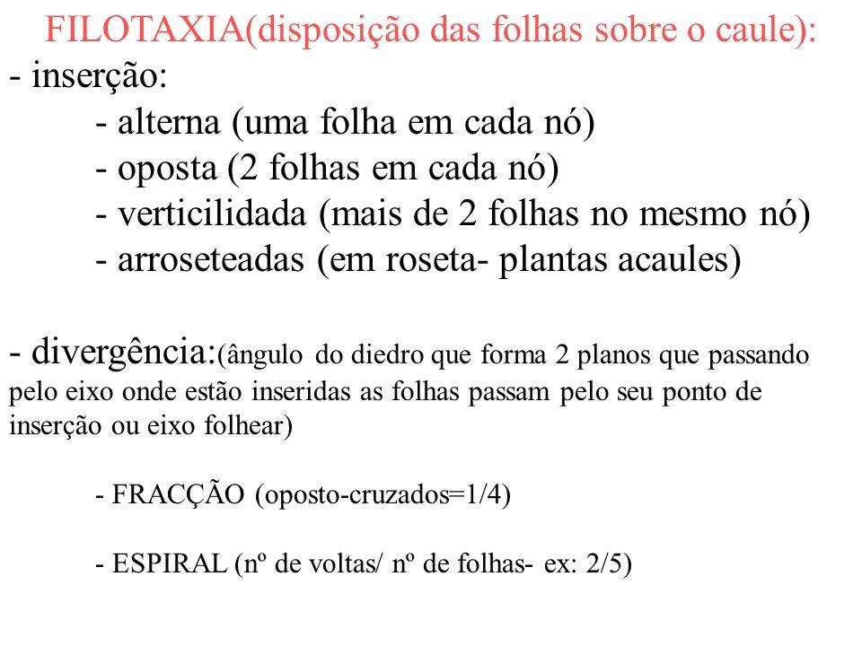 FILOTAXIA(disposição das folhas sobre o caule): - inserção: - alterna (uma folha em cada nó) - oposta (2 folhas em cada nó) - verticilidada (mais de 2