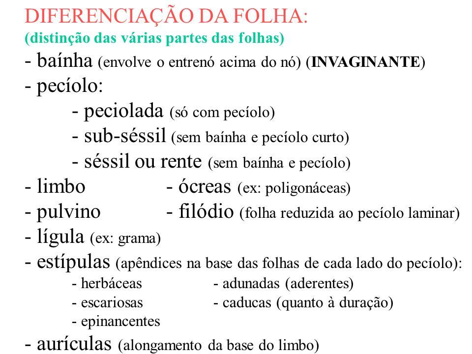 DIFERENCIAÇÃO DA FOLHA: (distinção das várias partes das folhas) - baínha (envolve o entrenó acima do nó) (INVAGINANTE) - pecíolo: - peciolada (só com