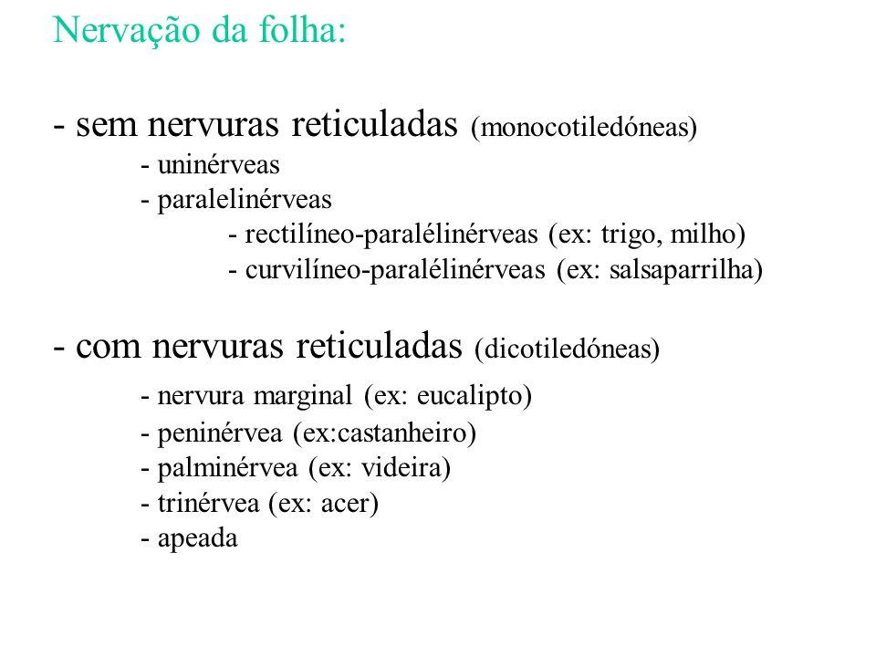 Nervação da folha: - sem nervuras reticuladas (monocotiledóneas) - uninérveas - paralelinérveas - rectilíneo-paralélinérveas (ex: trigo, milho) - curv