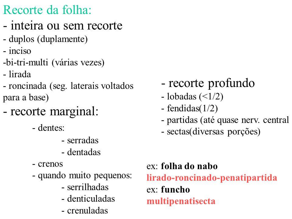Recorte da folha: - inteira ou sem recorte - duplos (duplamente) - inciso -bi-tri-multi (várias vezes) - lirada - roncinada (seg. laterais voltados pa