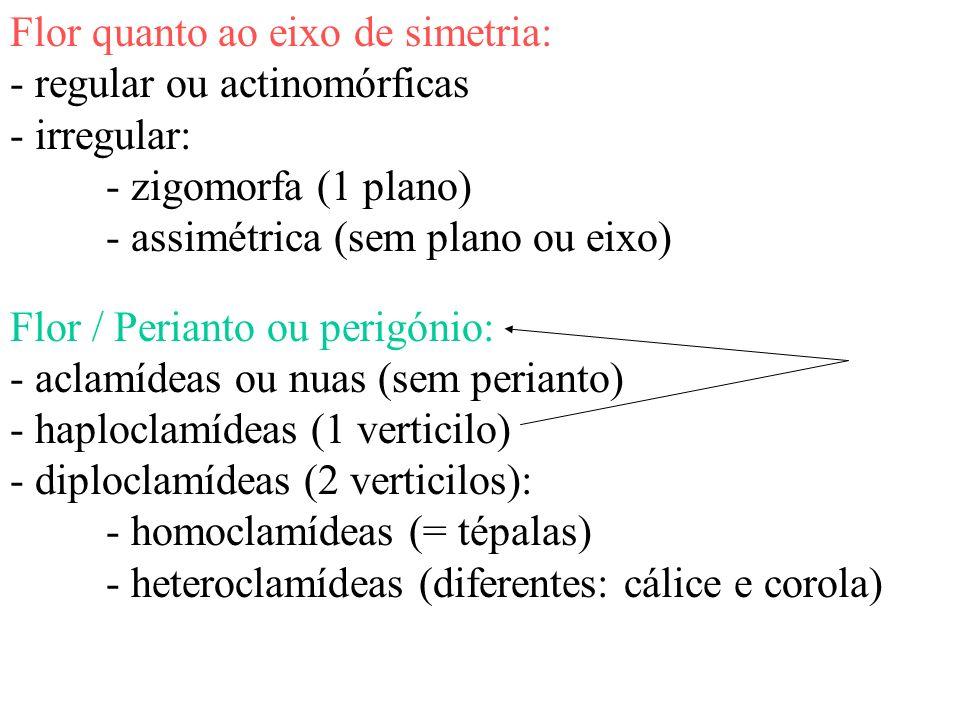 Flor quanto ao eixo de simetria: - regular ou actinomórficas - irregular: - zigomorfa (1 plano) - assimétrica (sem plano ou eixo) Flor / Perianto ou p