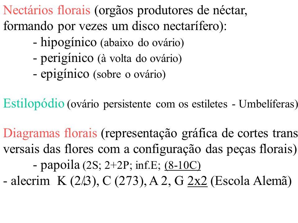 Nectários florais (orgãos produtores de néctar, formando por vezes um disco nectarífero): - hipogínico (abaixo do ovário) - perigínico (à volta do ová