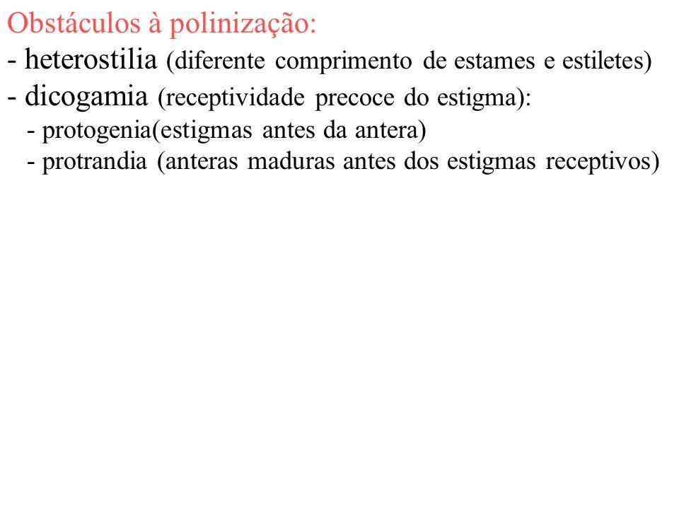 Obstáculos à polinização: - heterostilia (diferente comprimento de estames e estiletes) - dicogamia (receptividade precoce do estigma): - protogenia(e
