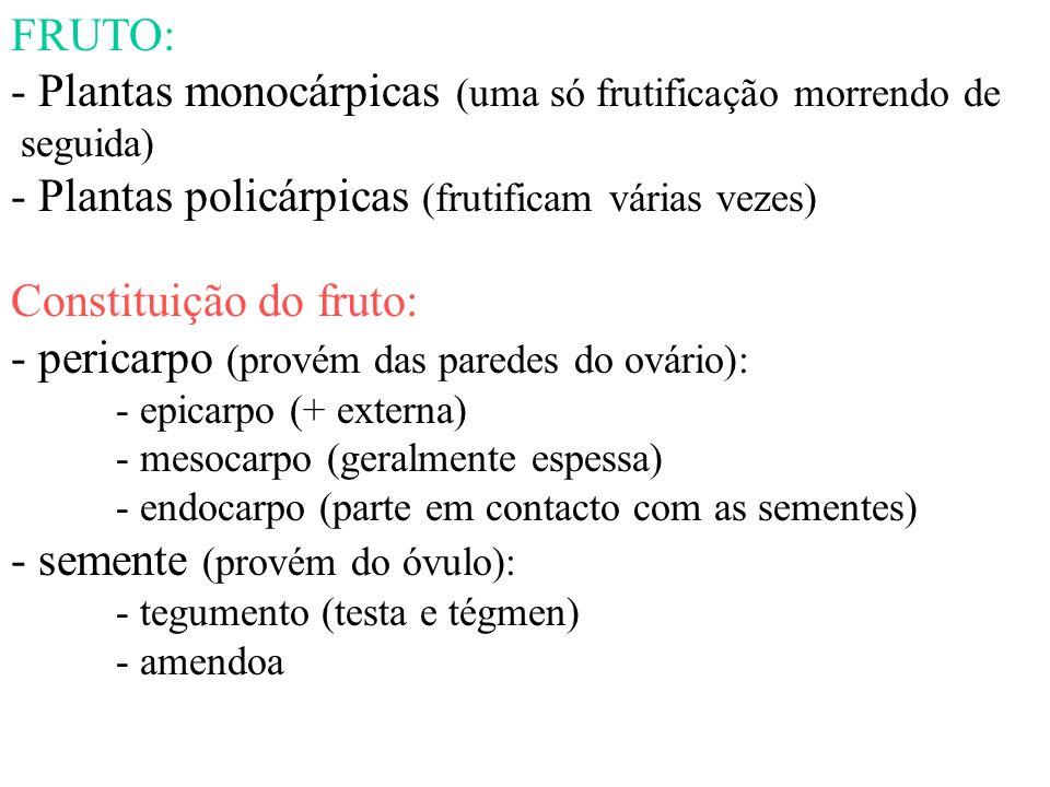 FRUTO: - Plantas monocárpicas (uma só frutificação morrendo de seguida) - Plantas policárpicas (frutificam várias vezes) Constituição do fruto: - peri