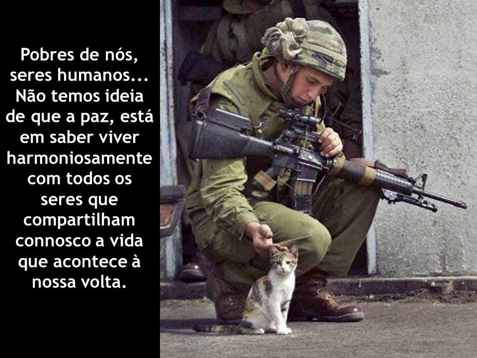 Pobres de nós, seres humanos... Não temos ideia de que a paz, está em saber viver harmoniosamente com todos os seres que compartilham connosco a vida