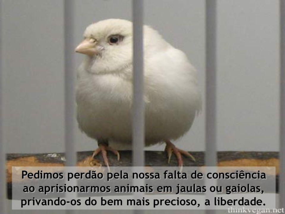 Pedimos perdão pela nossa falta de consciência ao aprisionarmos animais em jaulas ou gaiolas, privando-os do bem mais precioso, a liberdade.