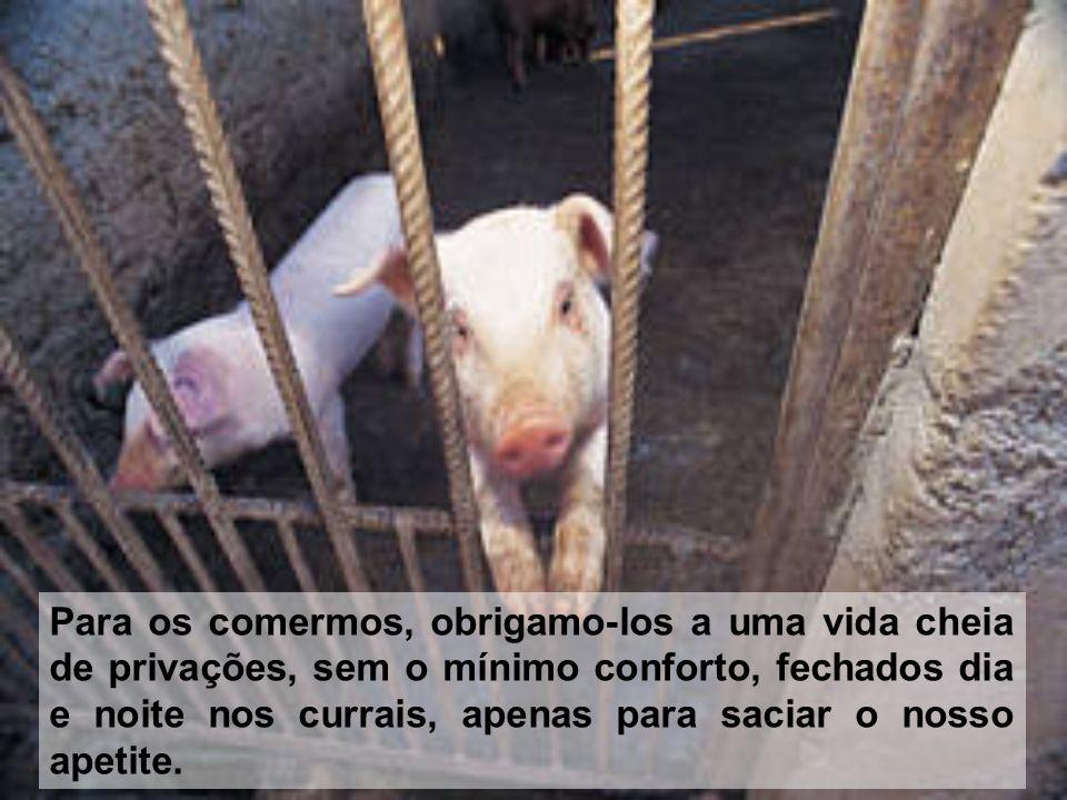 Para os comermos, obrigamo-los a uma vida cheia de privações, sem o mínimo conforto, fechados dia e noite nos currais, apenas para saciar o nosso apet