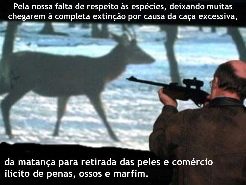 Pela nossa falta de respeito às espécies, deixando muitas chegarem à completa extinção por causa da caça excessiva, da matança para retirada das peles