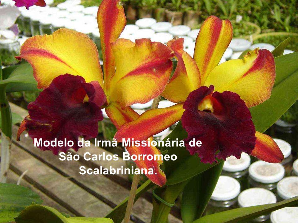 Modelo da Irmã Missionária de São Carlos Borromeo Scalabriniana.