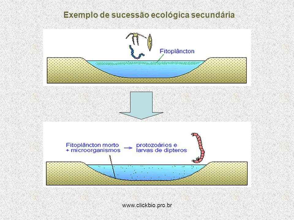 www.clickbio.pro.br Exemplo de sucessão ecológica secundária