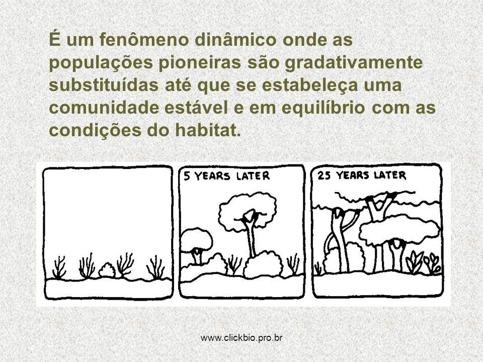 www.clickbio.pro.br É um fenômeno dinâmico onde as populações pioneiras são gradativamente substituídas até que se estabeleça uma comunidade estável e