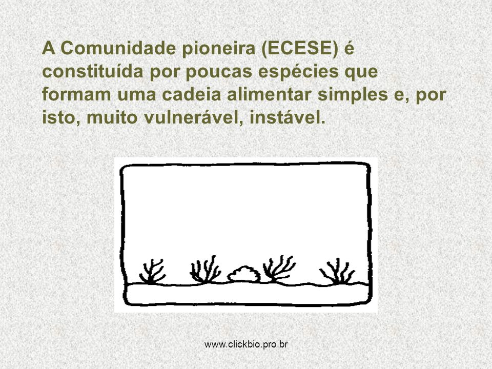 www.clickbio.pro.br A Comunidade pioneira (ECESE) é constituída por poucas espécies que formam uma cadeia alimentar simples e, por isto, muito vulnerá